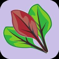 Cultivares cujas folhas podem ser consumidas quando jovens. Uniformes, bonitas e saborosas desde a primeira fase do cultivo.