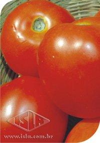 263 - Tomate Santa Cruz Kada (Paulista)